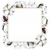 Fehér pamut virágos botanikai virágok. Akvarell háttér illusztráció meg. Keretszegély Dísz tér.