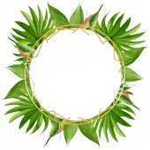 Albero spiaggia di palme lascia giungla botanica. Set di illustrazioni di sfondo dellacquerello. Telaio bordo ornamento quadrato.