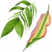Photo Palm beach tree leaves jungle botanical. Watercolor background illustration set. Isolated leaves illustration element.