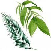 Palmový plážový strom opouští botanickou džungli. Vodný obrázek pozadí-barevný. Izolované listy ilustrace prvek.