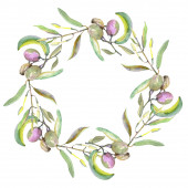 Photo Olive branch with black and green fruit. Watercolor background illustration set. Frame border ornament square.
