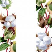 Pamut virágos botanikus virágok. Vad tavaszi levél vadvirág elszigetelt. Akvarell háttér illusztráció meg. Akvarell rajz divat Aquarelle elszigetelt. Keretszegély Dísz tér.