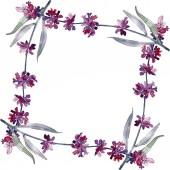 Levandule květinové botanické květy. Divoké květinové listí. Vodný obrázek pozadí-barevný. Akvarel na kreslicím módu Aquarelle. Orámovaná hranatá hranice.
