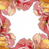 Fényképek Camelia virágos botanikai virágok. Akvarell háttér illusztráció meg. Keretszegély Dísz tér.