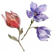 camelia florale botanische blumen. Aquarell Hintergrundillustration Set. isolierte Kamelie Illustrationselement.