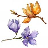 Photo Camelia floral botanical flowers. Watercolor background illustration set. Isolated camelia illustration element.