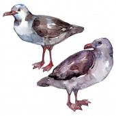 Sky madár sirály a vadon élő állatok. Vad szabadság, madár-val egy repülő sárvédő. Akvarell háttér illusztráció meg. Akvarell rajz divat Aquarelle. Az elszigetelt sirály illusztrációs elem.