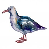 Nebeský pták Racek v divoké přírodě. Divoká svoboda, pták s létajícími křídly. Vodný obrázek pozadí-barevný. Akvarel na kreslicím módu. Izolovaný rodokl.