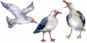 Sky bird seagull in a wildlife. Wild freedom, bird with a flying wings. Watercolor background illustration set. Watercolour drawing fashion aquarelle isolated. Isolated gull illustration element.