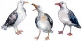 Sky madár sirály a vadon élő állatok. Vad szabadság, madár-val egy repülő sárvédő. Akvarell háttér illusztráció meg. Akvarell rajz divat Aquarelle elszigetelt. Az elszigetelt sirály illusztrációs elem.