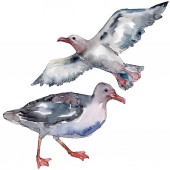 Nebeský pták Racek v divoké přírodě. Divoká svoboda, pták s létajícími křídly. Vodný obrázek pozadí-barevný. Akvarel na kreslicím módu Aquarelle. Izolovaný rodokl.