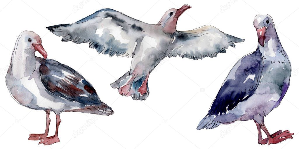 Sky bird seagull in a wildlife. Wild freedom, bird with a flying wings. Watercolor background illustration set. Watercolour drawing fashion aquarelle isolated. Isolated gull illustration element. stock vector