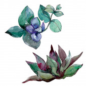 Succulents floral botanical flowers. Wild spring leaf wildflower isolated. Watercolor background illustration set. Watercolour drawing fashion aquarelle. Isolated succulent illustration element.