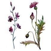Photo Wildflowers floral botanical flowers. Watercolor background illustration set. Isolated flowers illustration element.