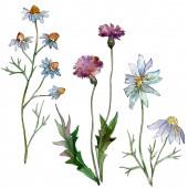 Wildflowers virágos botanikai virágok. Vad tavaszi levél vadvirág elszigetelt. Akvarell háttér illusztráció meg. Akvarell rajz divat Aquarelle. Izolált virágok illusztrációs elem.