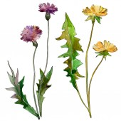 Květinové květiny. Divoké květinové listí. Vodný obrázek pozadí-barevný. Akvarel na kreslicím módu. Ilustrace izolovaná květinový prvek.