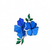 Vektorové botanické květiny lnu. Modré a zelené ryté barvy. Izolovaný ilustrační prvek.