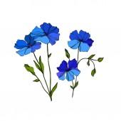 Vektor len virágos botanikai virágok. Kék és zöld gravírozott tinta művészet. Az elszigetelt len illusztrációs elem.