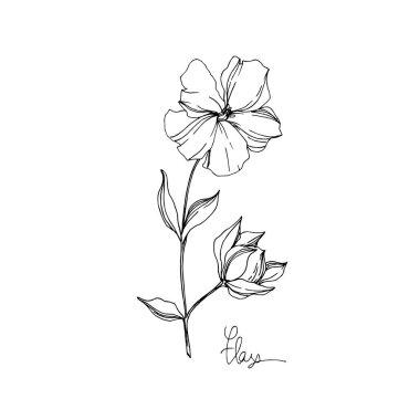 Vektör Keten çiçek botanik çiçekler. Siyah ve beyaz oyulmuş mürekkep sanatı. İzole keten illüstrasyon elemanı.