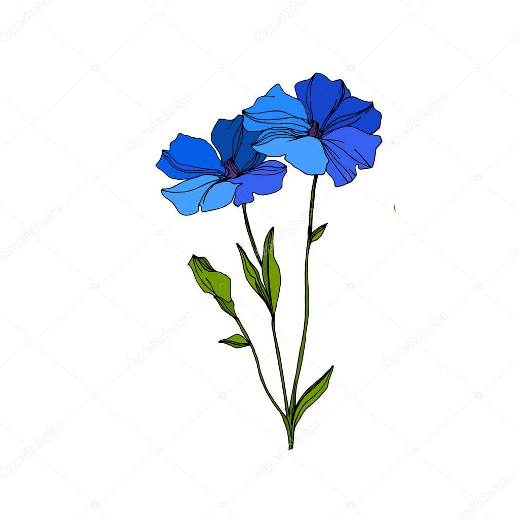 Vector Flax floral botanical flowers. Wild spring leaf wildflower isolated. Blue and green engraved ink art. Isolated flax illustration element on white background. clipart vector