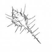 Vektor Sommer Strand Muschel tropischen Elementen. Schwarz-weiß gestochene Tuschekunst. Isolierte Granaten illustrieren Element.