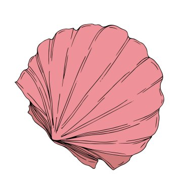 Vector Summer beach seashell tropical elements. Engraved ink art. Isolated shells illustration element on white background. clip art vector