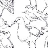 Vector Sky madár sirály egy vadon élő állatok elszigetelt. Fekete-fehér vésett tinta Art. Folytonos háttérmintázat.