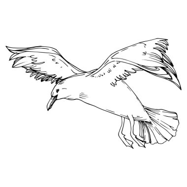 Sky bird seagull in a wildlife. Wild freedom, bird with a flying wings. Black and white engraved ink art. Isolated gull illustration element on white background. stock vector