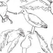 Vektorový ptačí pták v divoké přírodě. Černé a bílé ryté inkoustem. Bezespání vzorek pozadí.