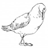 Vektor Himmelsvogel Möwe in einer Tierwelt. Schwarz-weiß gestochene Tuschekunst. isoliertes Möwenillustrationselement.