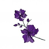 Fotografie Vector Orchid floral botanical flowers. Black and purple engraved ink art. Isolated orchids illustration element.