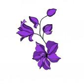 Vektorové orchideje květinové botanické květiny. Černý a fialový ryzovaný inkoust. Izolované orchideje, ilustrace.