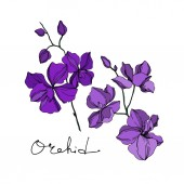 Vector Orchid floral botanical flowers. Black and purple engraved ink art. Isolated orchids illustration element.