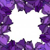 Vector orchidea virágos botanikus virágok. Fekete és lila vésett tinta művészet. Keretszegély Dísz tér.