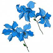 Fotografie Vektorové orchideje květinové botanické květiny. Černé a bílé ryté inkoustem. Izolované orchideje, ilustrace.