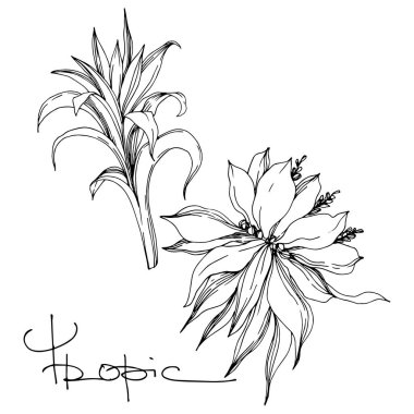 Vector Exotic tropical hawaiian summer. Palm beach tree leaves jungle botanical flowers. Black and white engraved ink art. Isolated flower illustration element. clip art vector