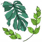 Plážový strom Vector Palm opouští botanickou džungli. Černé a bílé ryté inkoustem. Izolovaná listová ilustrace.