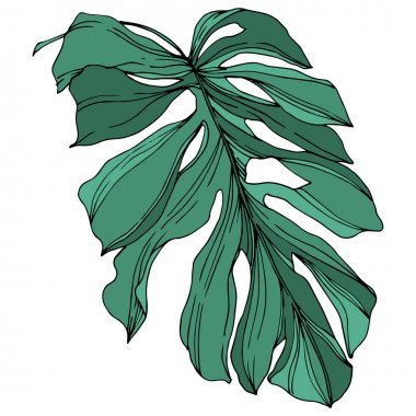 Vector Exotic tropical hawaiian summer. Palm beach tree leaves jungle botanical. Black and white engraved ink art. Isolated leaf illustration element on white background. stock vector