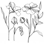 Fotografie Vector Flax floral botanical flowers. Black and white engraved ink art. Isolated flax illustration element.
