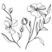 Vektor len virágos botanikai virágok. Fekete-fehér vésett tinta Art. Az elszigetelt len illusztrációs elem.