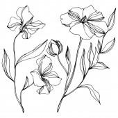 Vektorové botanické květiny lnu. Černé a bílé ryté inkoustem. Izolovaný ilustrační prvek.