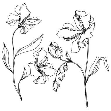 Vector Flax floral botanical flowers. Wild spring leaf wildflower isolated. Black and white engraved ink art. Isolated flax illustration element on white background. clip art vector