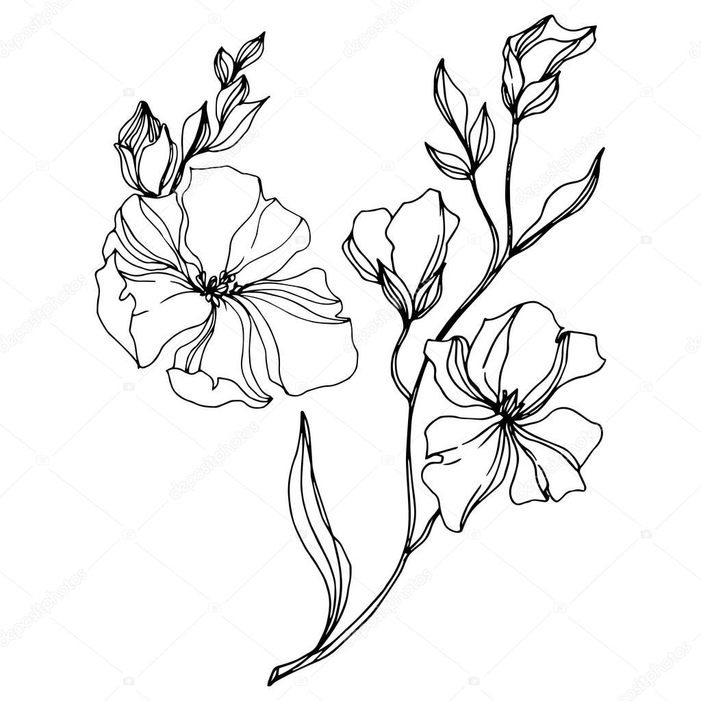 Vector Flax floral botanical flowers. Wild spring leaf wildflower isolated. Black and white engraved ink art. Isolated flax illustration element on white background. clipart vector