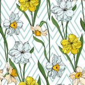 Vektor Narcissus virágos botanikai virágok. Fekete-fehér vésett tinta Art. Folytonos háttérmintázat.