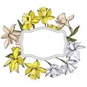 Vector Narcissus floral botanical flowers. Black and white engraved ink art. Frame border ornament square.