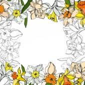Květinové botanické květiny Vector Narcissus. Černé a bílé ryté inkoustem. Orámovaná hranatá hranice.