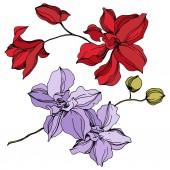 Fotografie Květinové botanické květiny. Černé a bílé ryté inkoustem. Izolované orchideje, ilustrace.