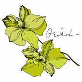 Vektorororchidee florale botanische Blumen. Schwarz-weiß gestochene Tuschekunst. isolierte Orchideen Illustrationselement.