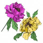 Květinové botanické květiny. Černé a bílé ryté inkoustem. Izolované peonie – ilustrace prvku.