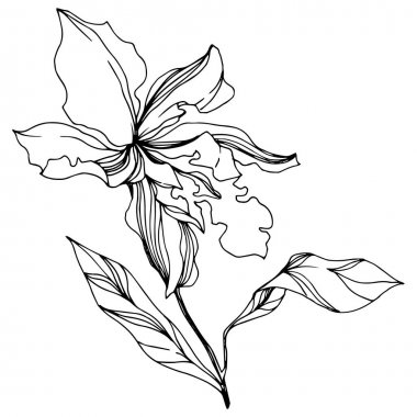 Vector Orchid floral botanical flowers. Wild spring leaf wildflower isolated. Black and white engraved ink art. Isolated orchids illustration element on white background. stock vector
